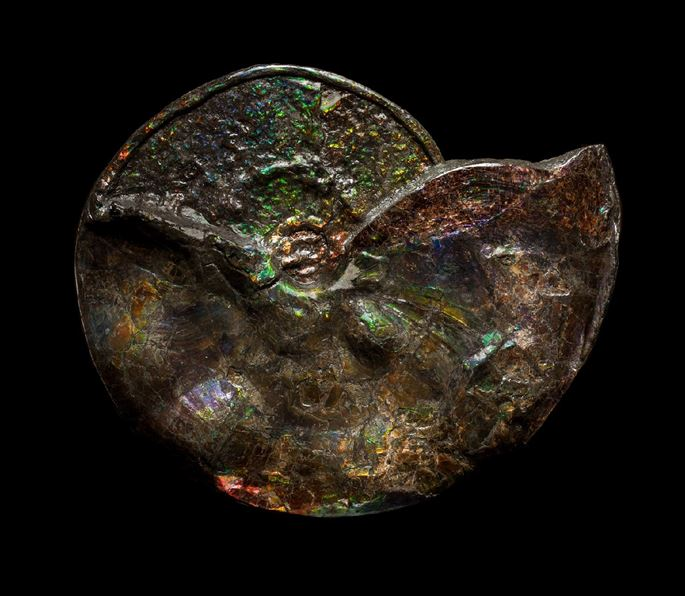 Large Iridescent Ammonite | MasterArt