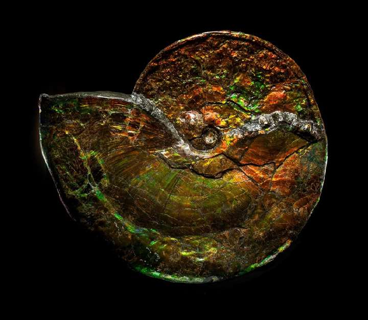 Large Iridescent Ammonite
