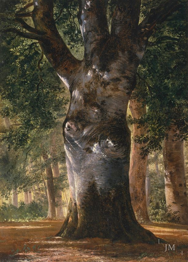 Alexandre Calame - Trunk of a Beech Tree | MasterArt