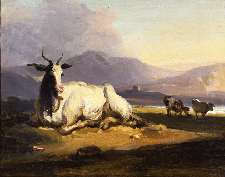 A goat sitting in a mountainous river landscape with cattle beyond