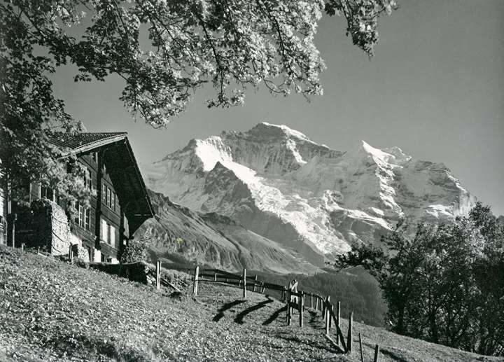 The Jungfrau seen from Wengen, Bernese Oberland, Switzerland.