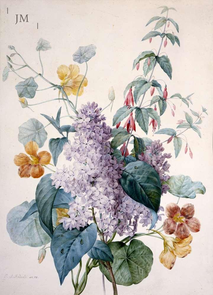 Lilacs, Nasturtium & Fuschia