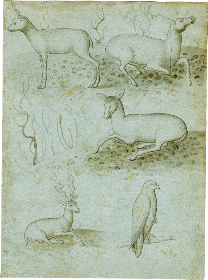 North Italian School - A Sheet from a Model Book with Four Studies of Deer and a Falcon | MasterArt