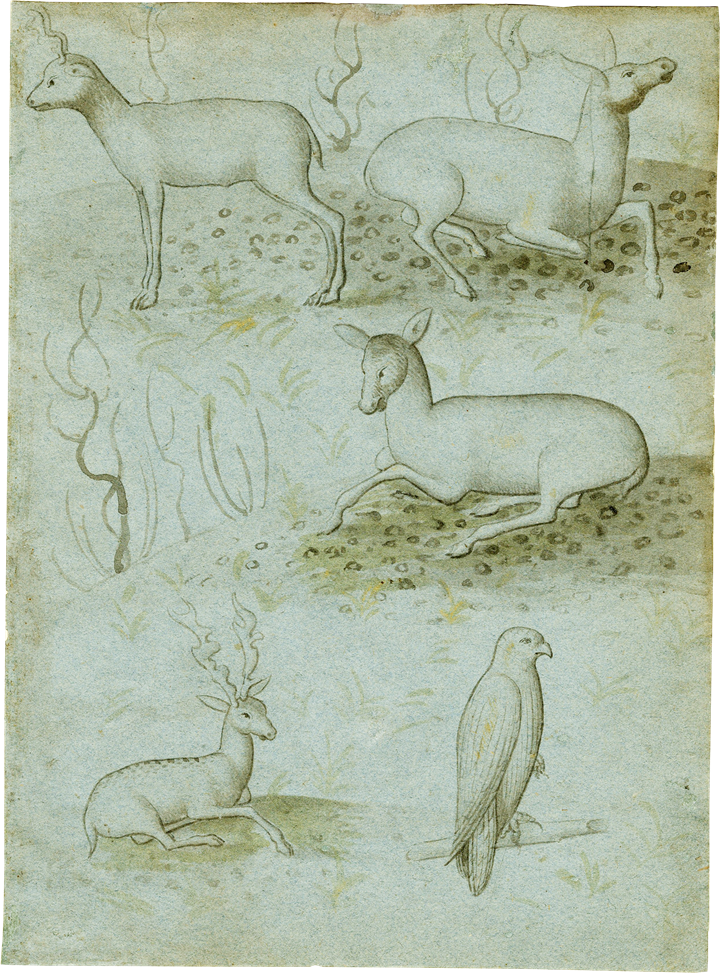 A Sheet from a Model Book with Four Studies of Deer and a Falcon