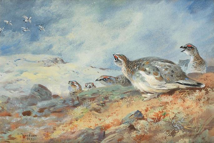 Archibald Thorburn - Ptarmigan in the snow | MasterArt