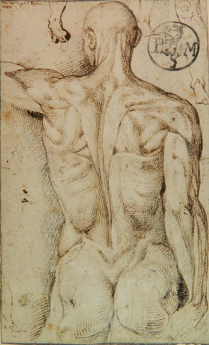 Anatomy Study (recto) and Skeletal Study (verso)