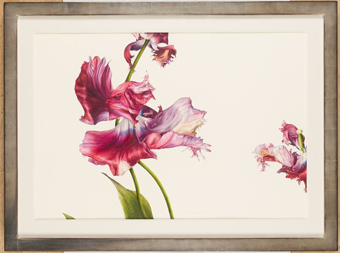 Fiona STRICKLAND - Tulipa 'Estella Rijnveld'    MasterArt