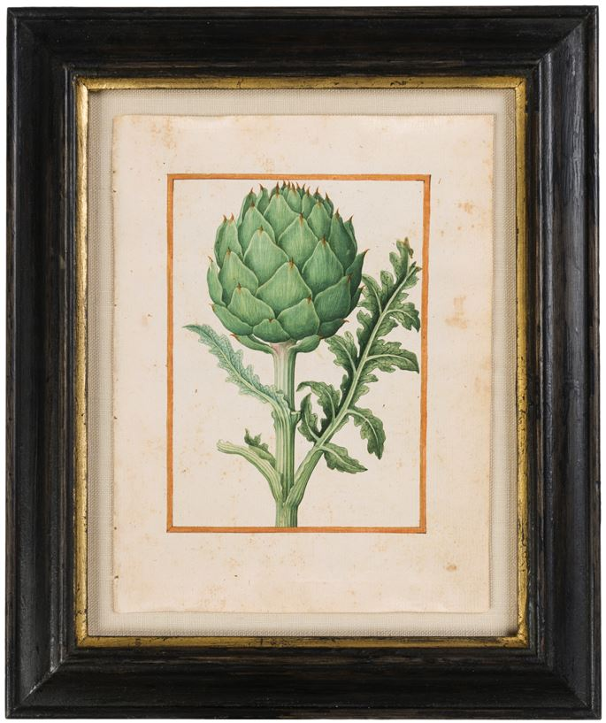 Jacques LE MOYNE DES MORGUES - A Globe Artichoke (Cynara scolymus) | MasterArt