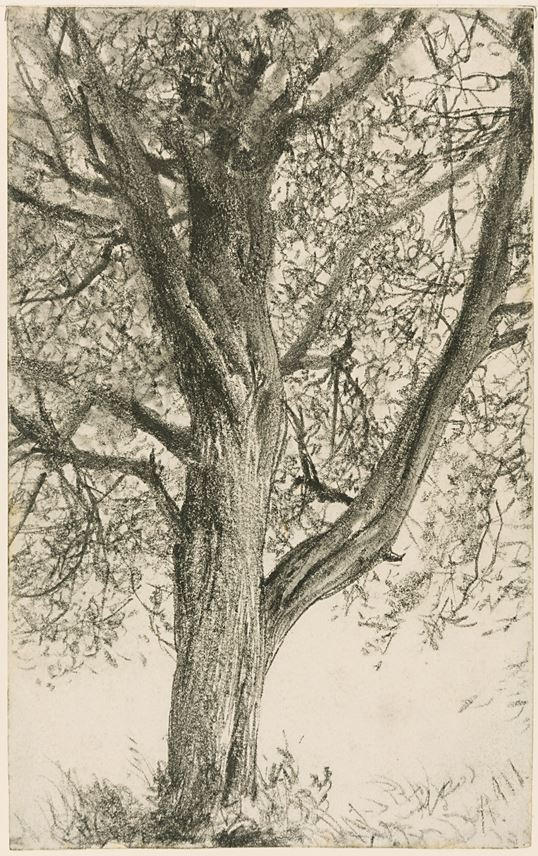 Adolph MENZEL - Study of a Tree | MasterArt