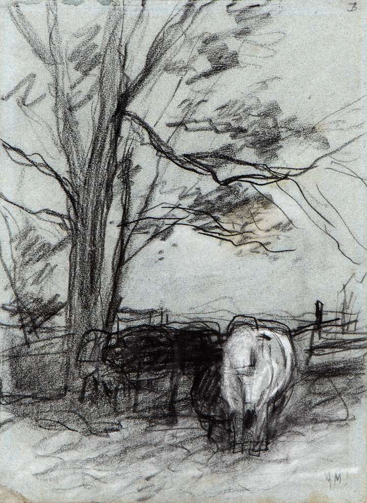 Cows in the Corner of a Field