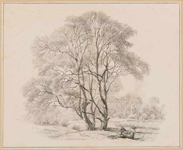 Study of Two Trees by a Lake or Pond