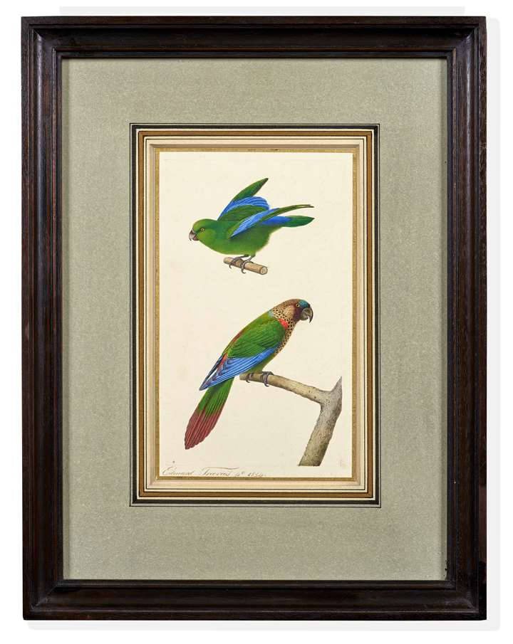 A Mexican Parrotlet (Forpus cyanopygius) and a Painted Conure (Pyrrhura picta)