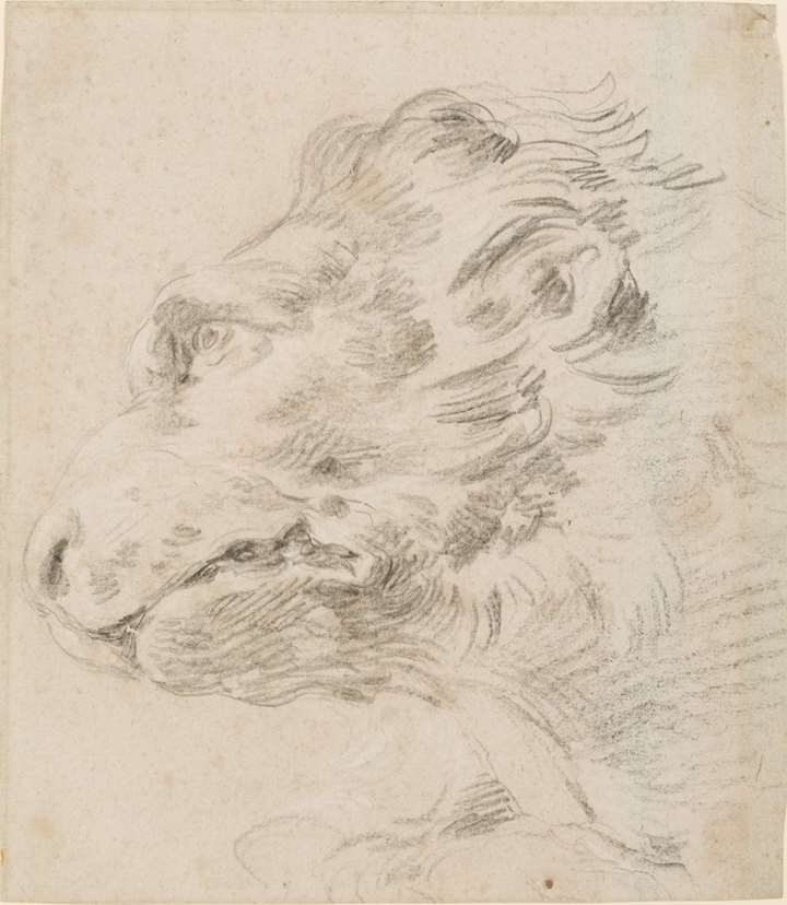 The Head of a Lion