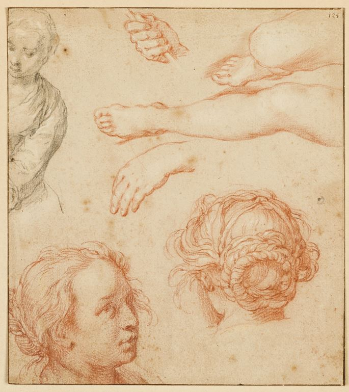 Abraham Bloemaert - Studies of the Head of a Young Woman, Legs and Hands and the Bust of a Woman   MasterArt
